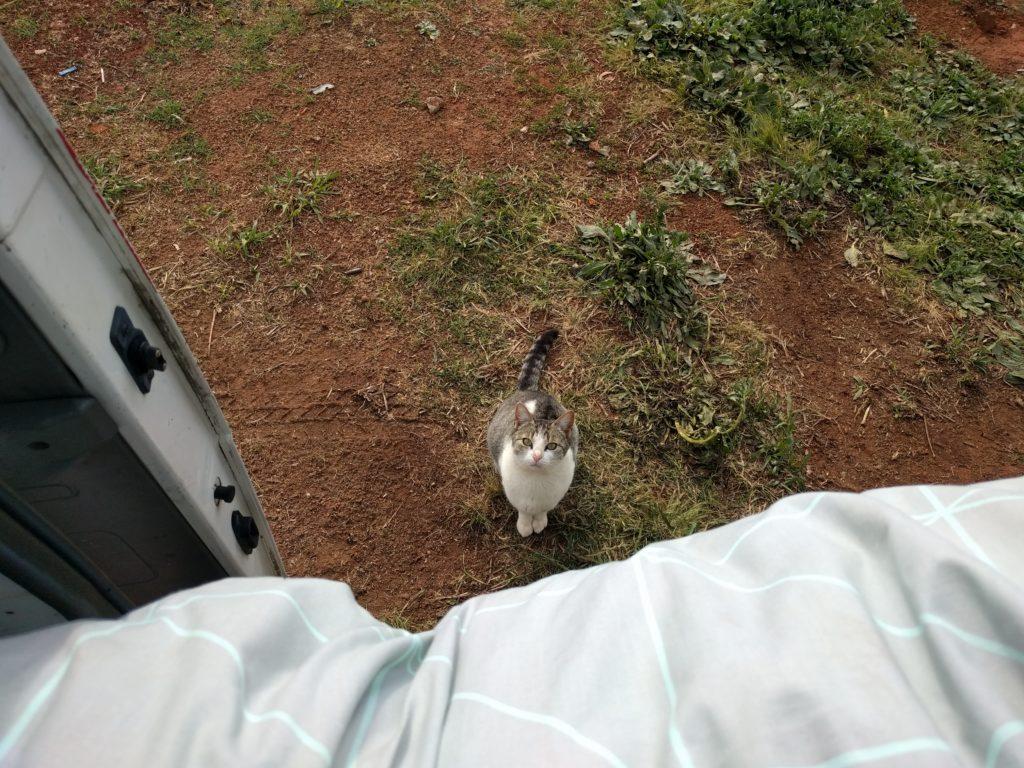 L'un de nos nouveaux voisins. Hello you!