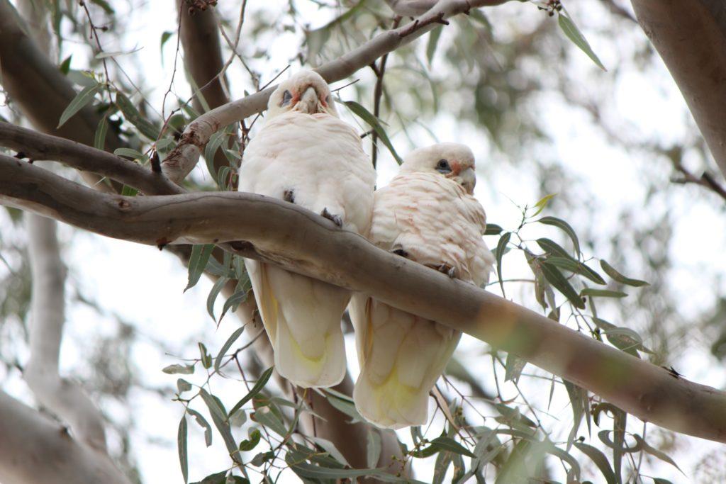 D'autres perroquets