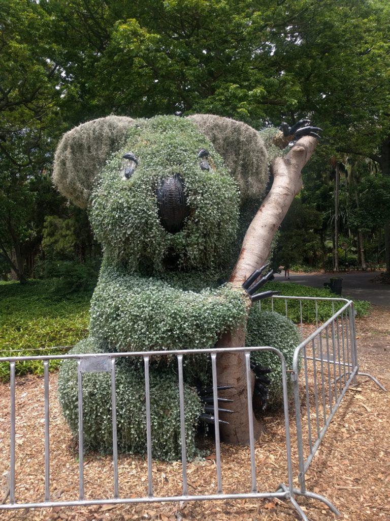 Koala végétal