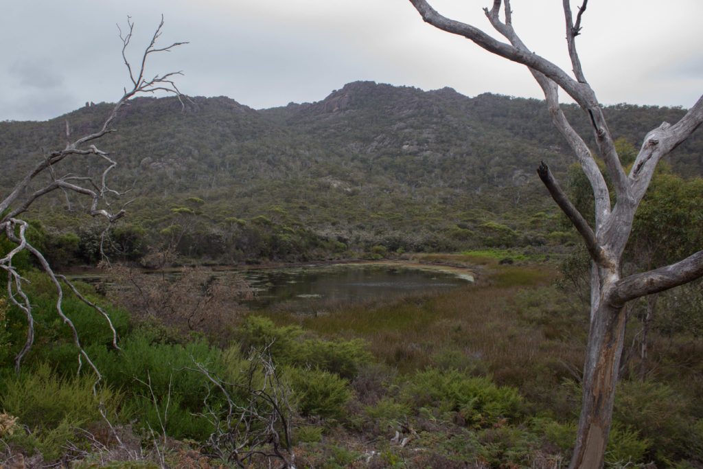 Plaine dans le Freycinet National Park