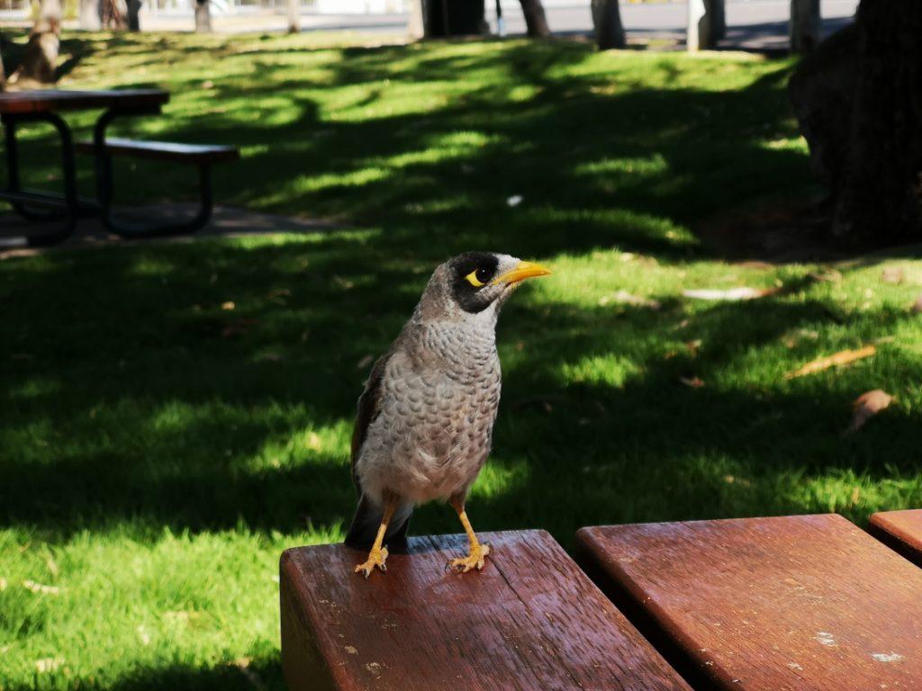 Un oiseau curieux lors de notre pique nique à Bordetown