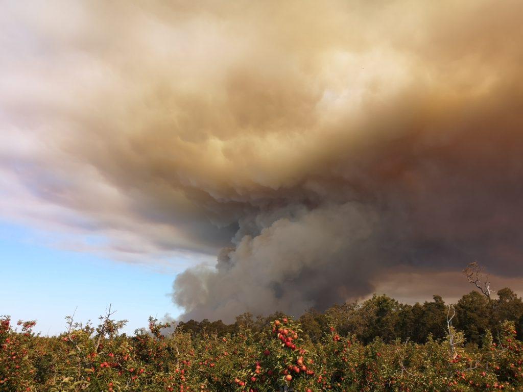 Un feu de forêt déclenché pour permettre de nettoyer
