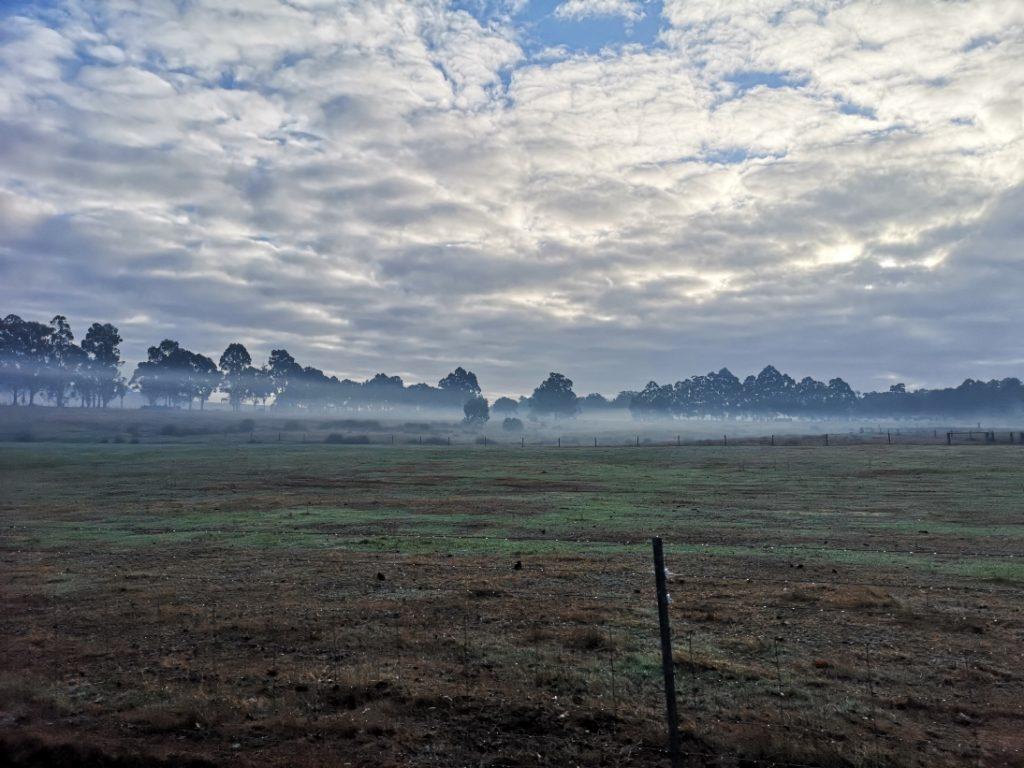 La brume du matin sur les enclos des moutons