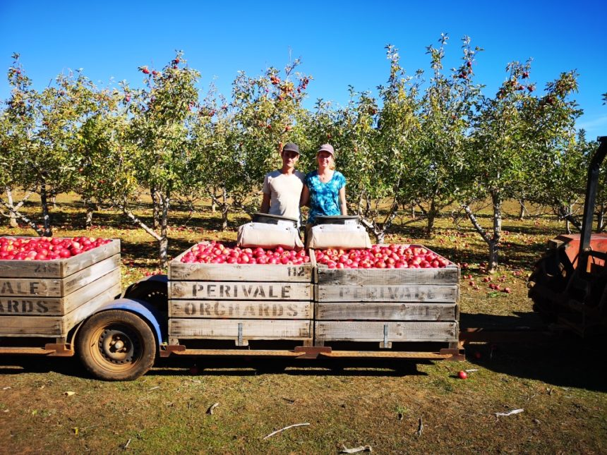 Nous deux devant des bennes de pommes