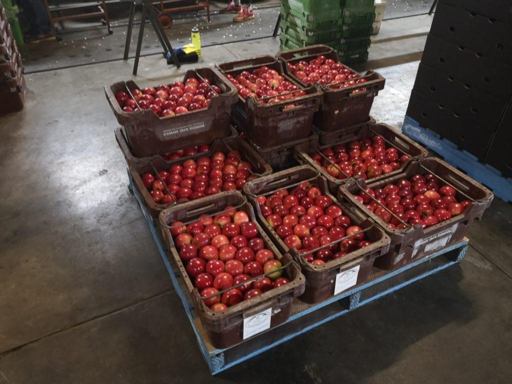 Les belles pommes rouges une fois lavées et triées