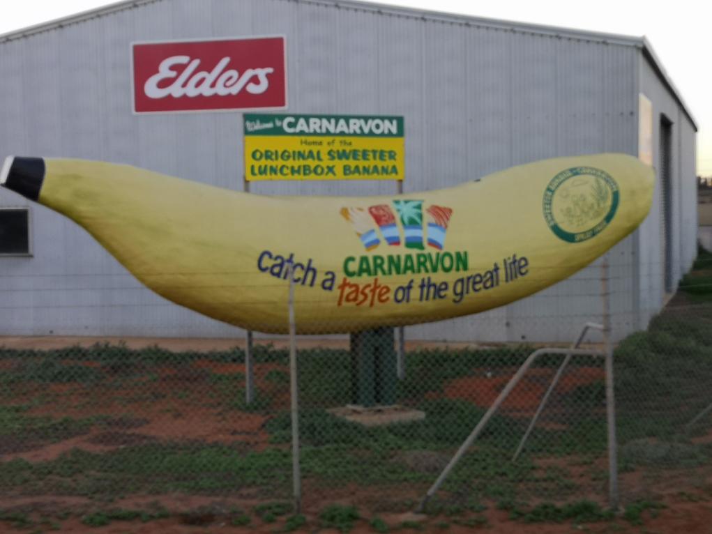 La banane géante de Carnavon
