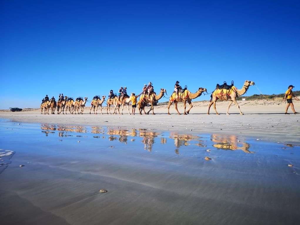 Notre caravane de dromadaires sur Cable Beach