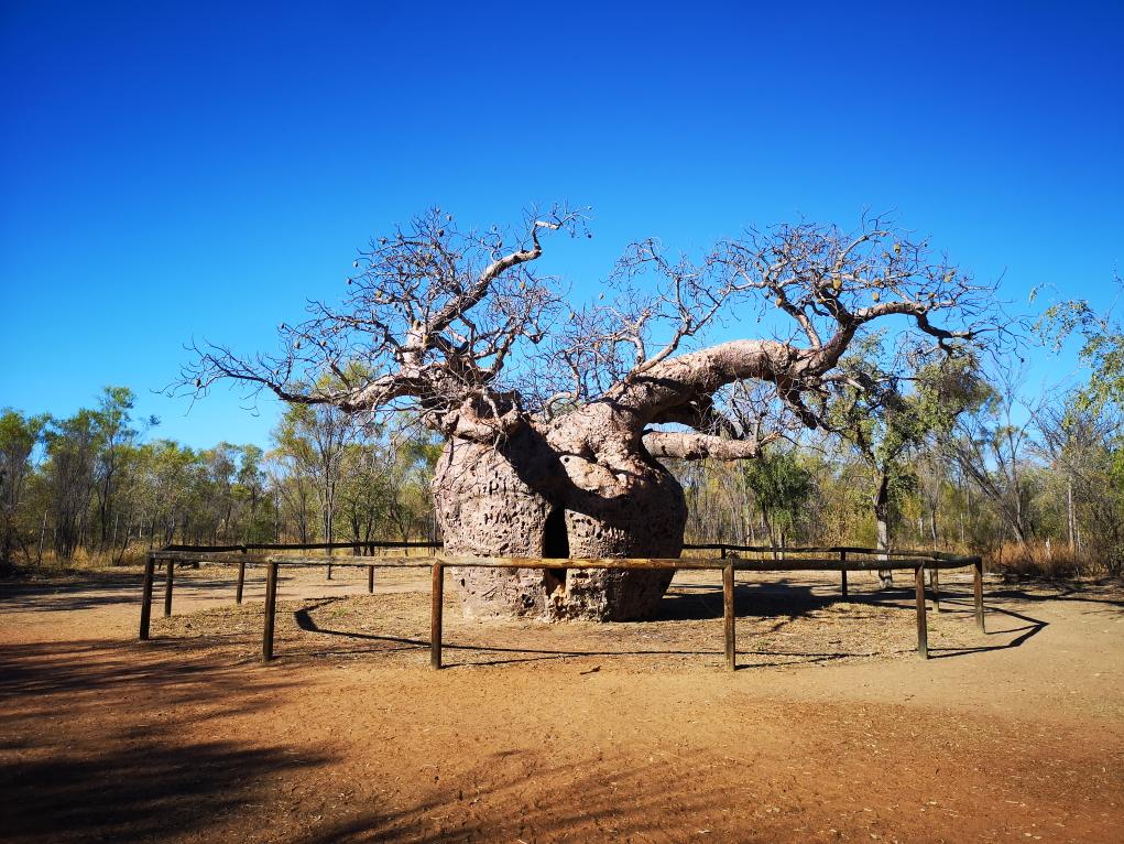 """Le tristement célèbre """"Prison Tree"""" de Derby"""