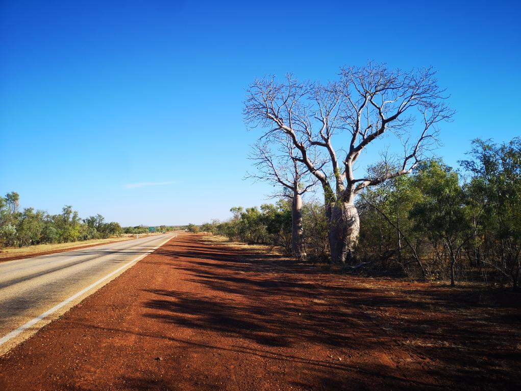 La route toujours aussi droite mais avec des baobabs