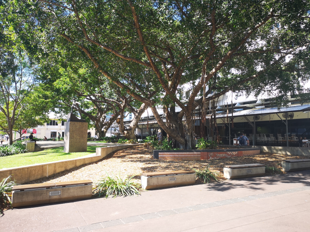 Un Fig Tree dans le centre ville de Darwin