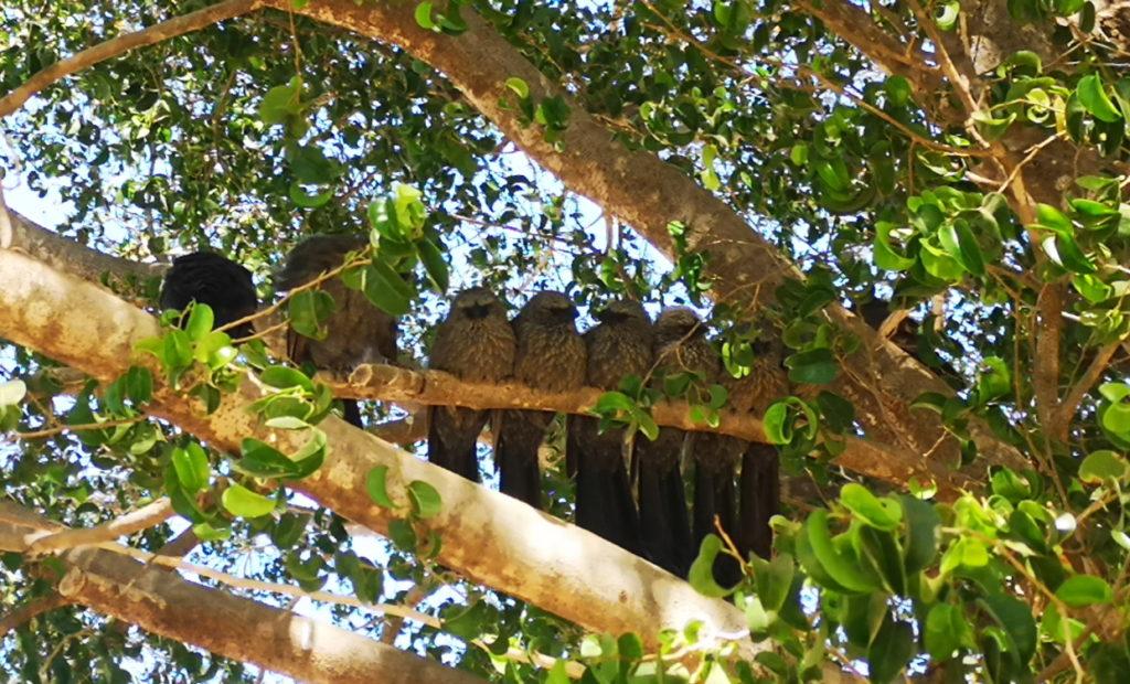 Des oiseaux regroupés à l'ombre sur une branche