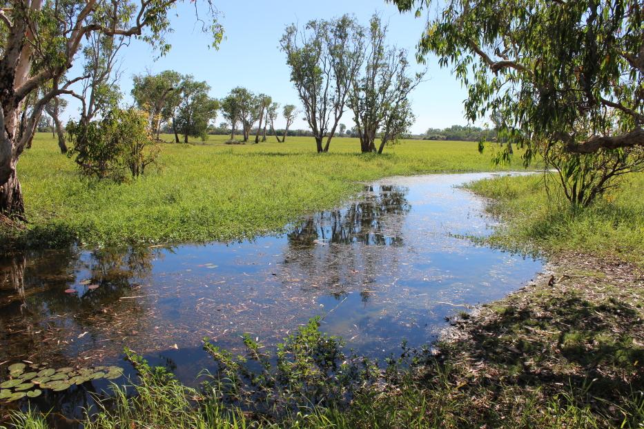 Yellow Water River - des eaux calmes