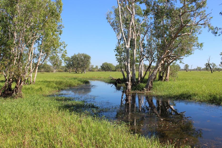 Yellow Water River - une faune et une flore abondantes