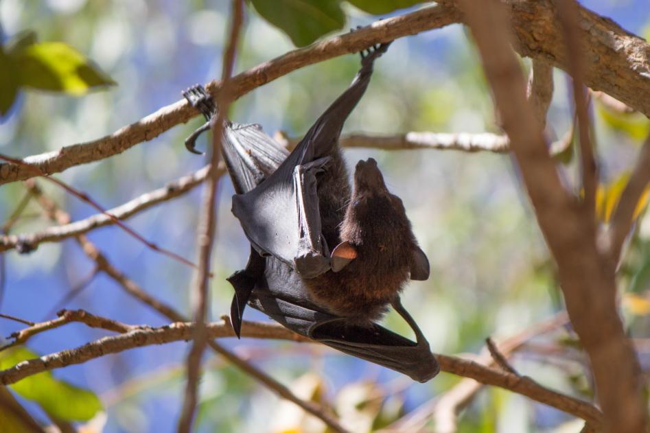 Les chauves-souris plutôt actives malgré l'heure de la journée