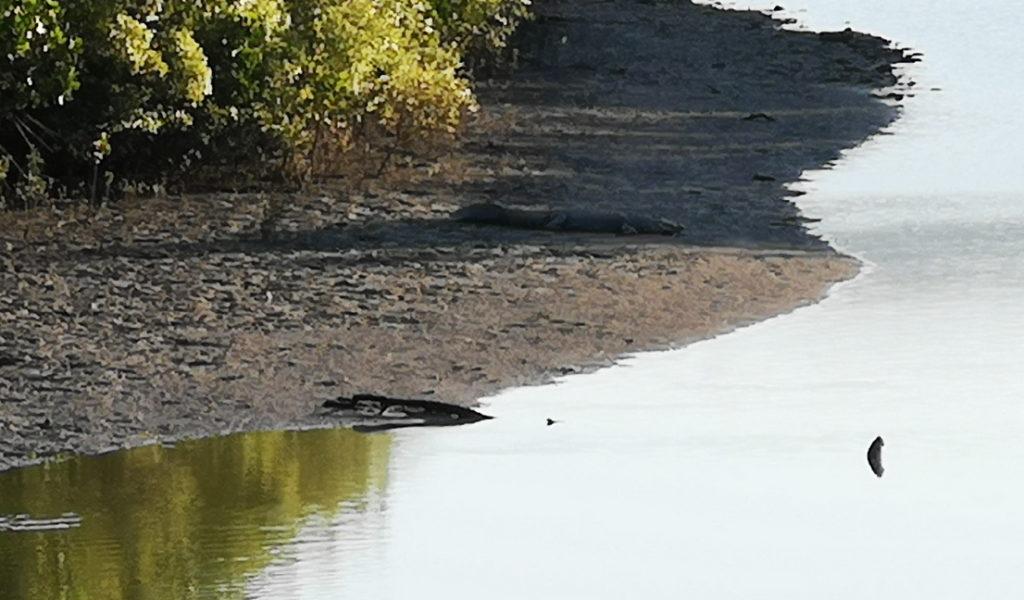 On le voit mal, c'était loin, mais il y a un croco au bord de la rivière!