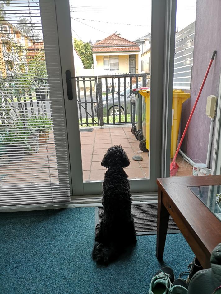 Danny tout triste devant la porte d'entrée par laquelle je suis parti pour la journée