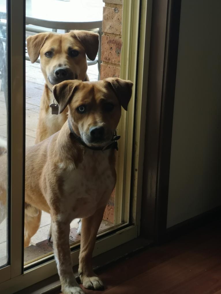Rufus et Maverick, les deux terreurs du quartier