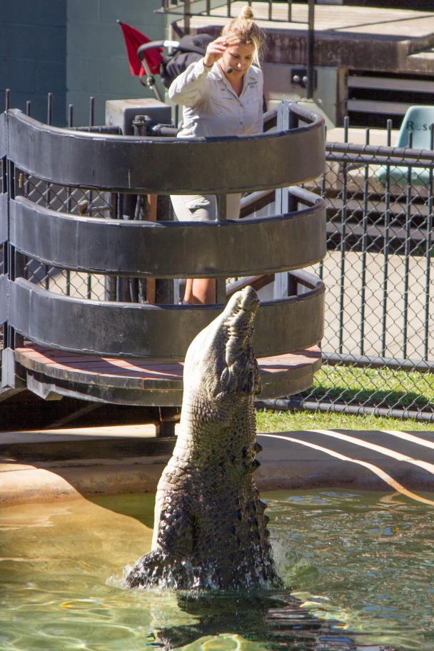 Le saut du crocodile