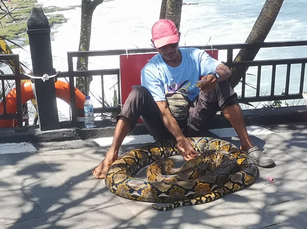 Un serpent pour les touristes