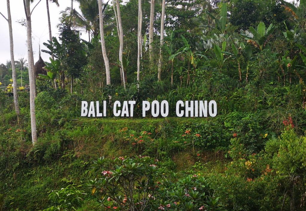 """Bali """"Cat Poo Chino"""""""