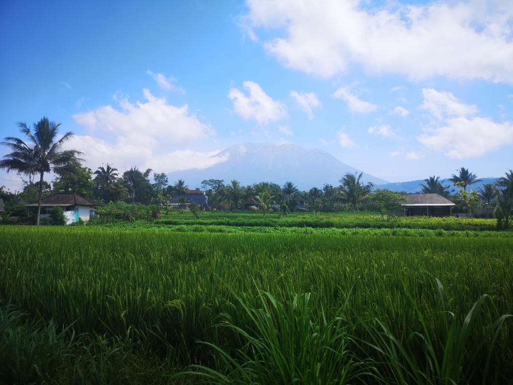 Vue sur les rizières avec le Mont Agung en fond
