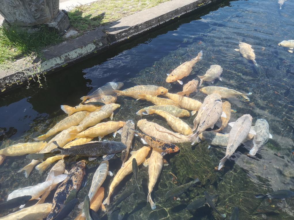 Il est possible de nourrir les poissons