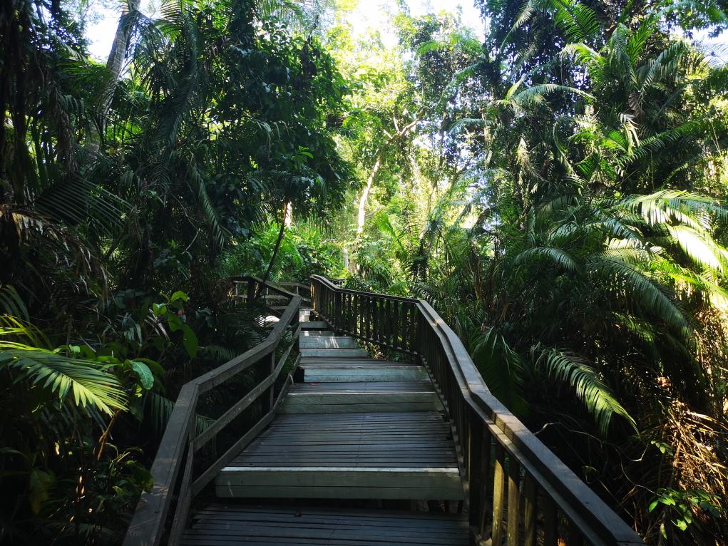 Une grande promenade ombragée dans la Monkey Forest