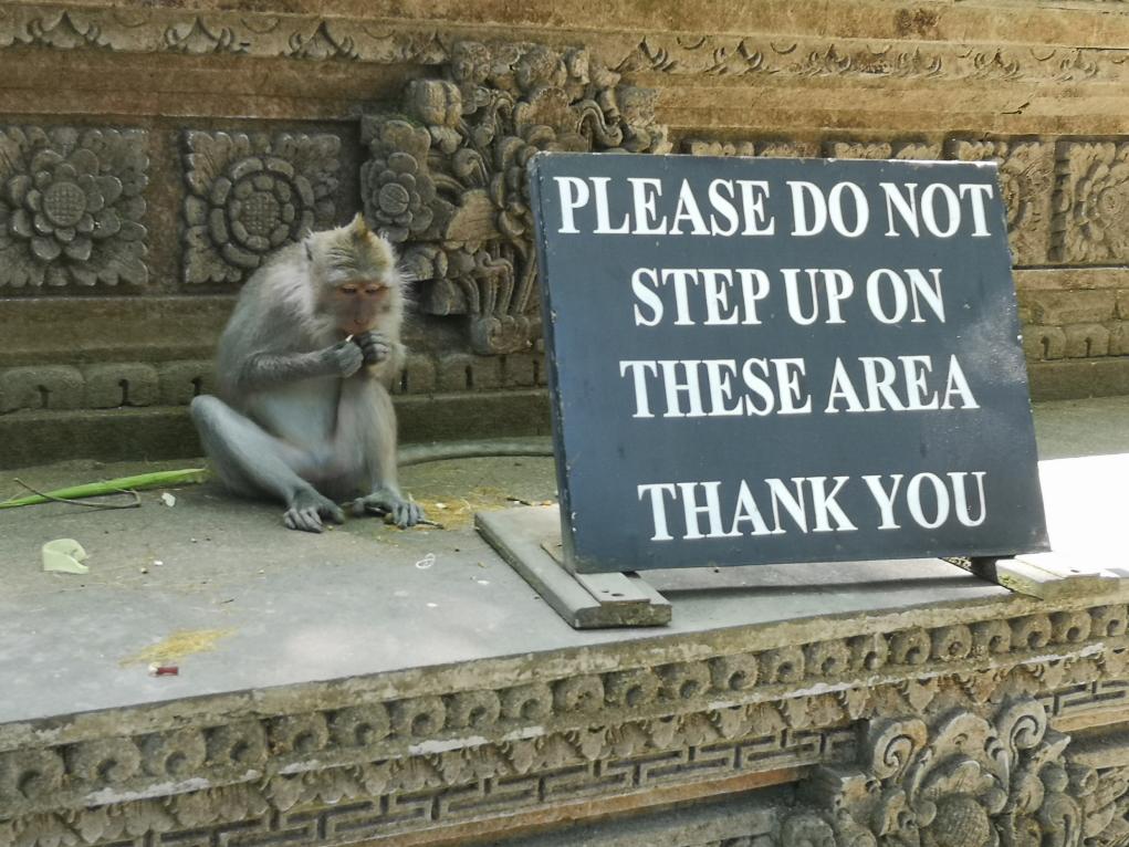 Macaque rebelle