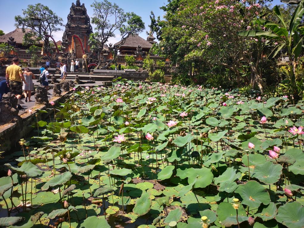 Les grands bassins de Lotus du temple Saraswati