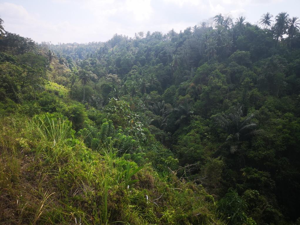 Vue dans les deux vallées feuillues