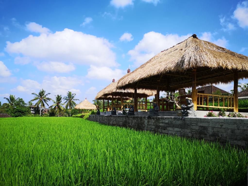 Des paillotes au bord des rizières