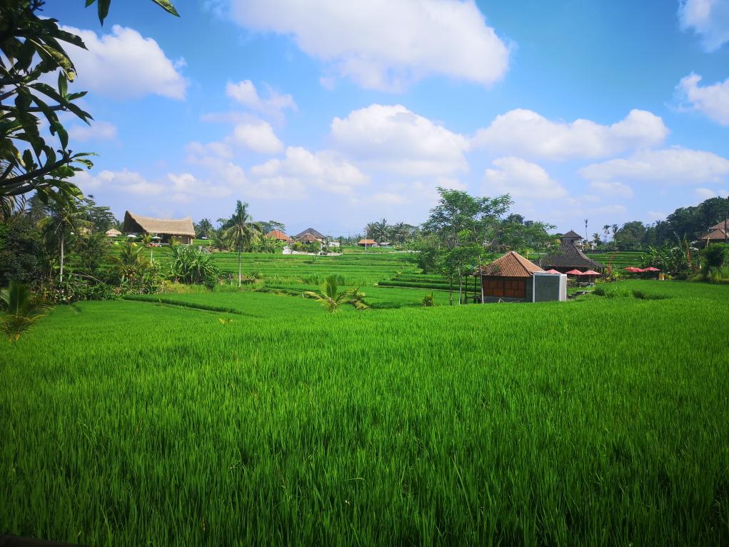 Le Karsa Kafe est au milieu des rizières
