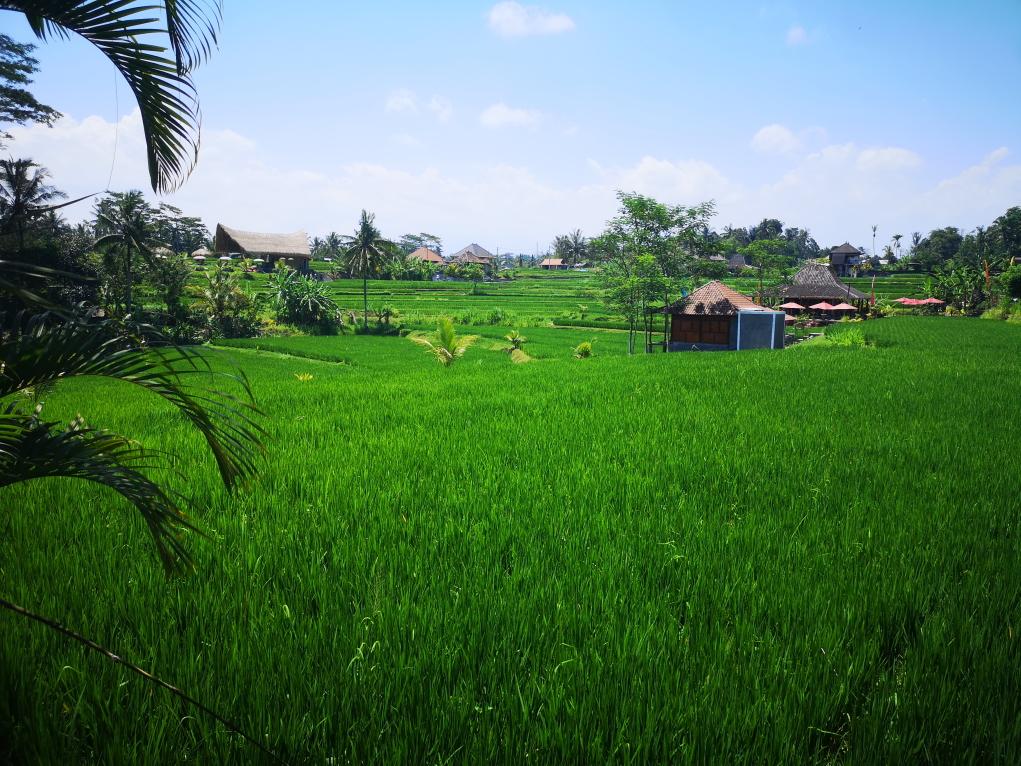 Vue sur les rizières, on ne s'en lasse pase