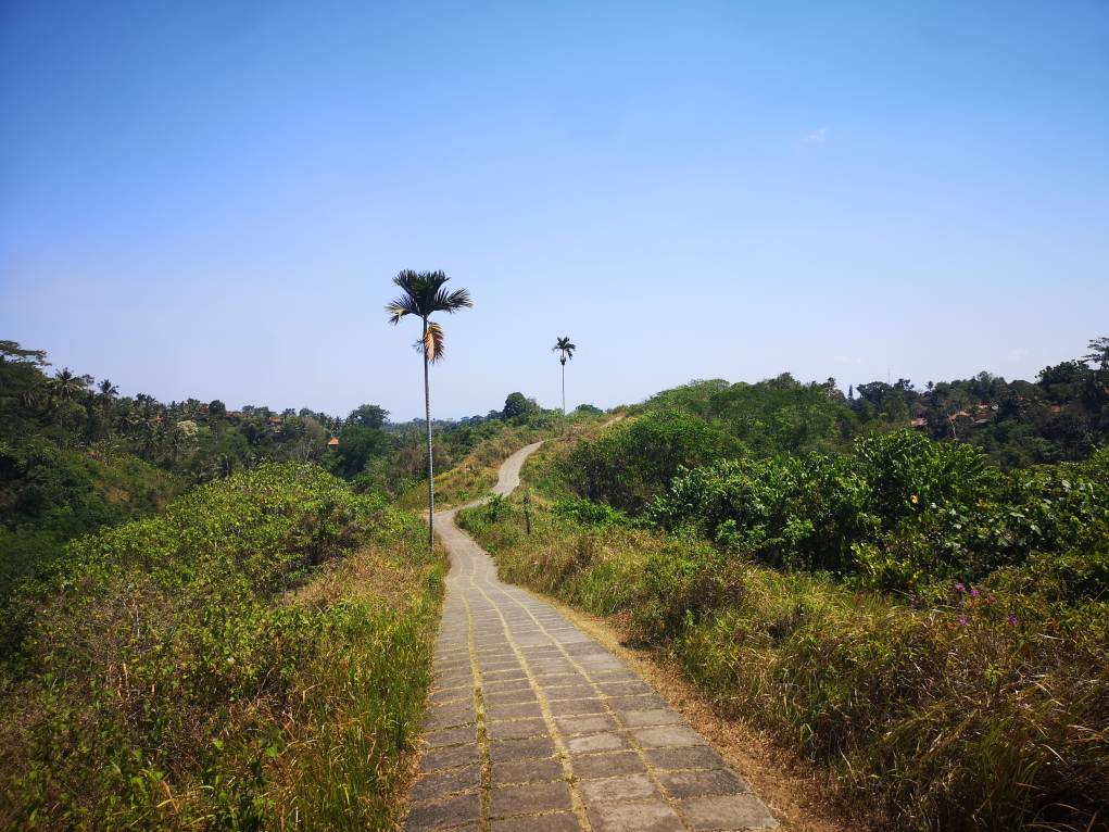 Retour vers Ubud sur la Campuhan Ridge Walk