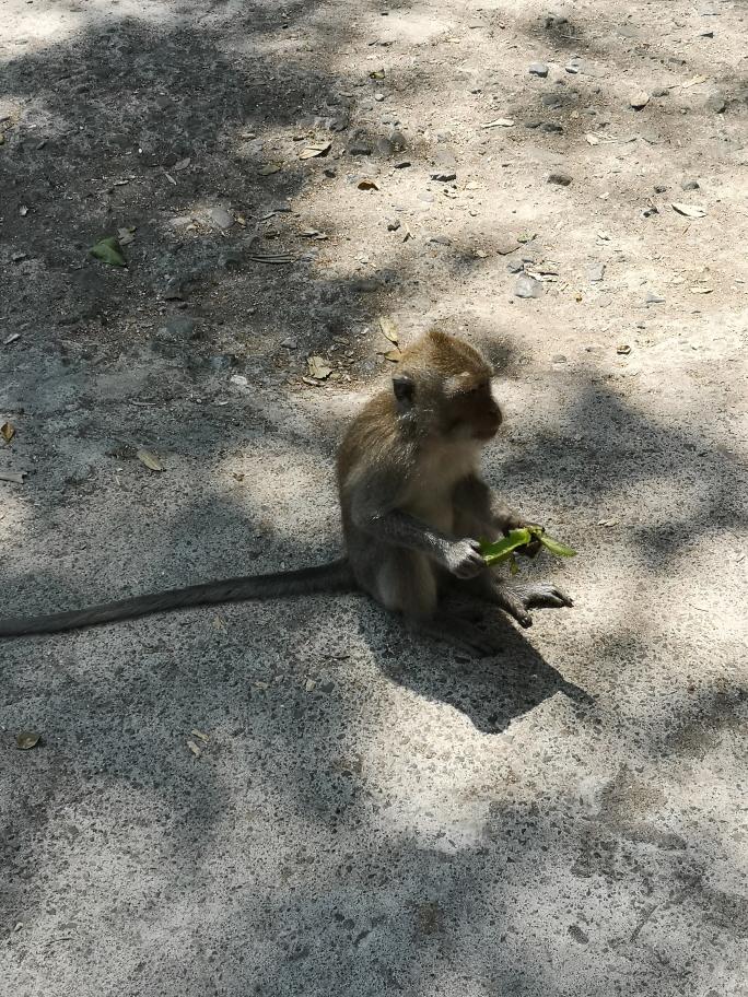 Un petit macaque sur la route entre Bangsal et Mataram