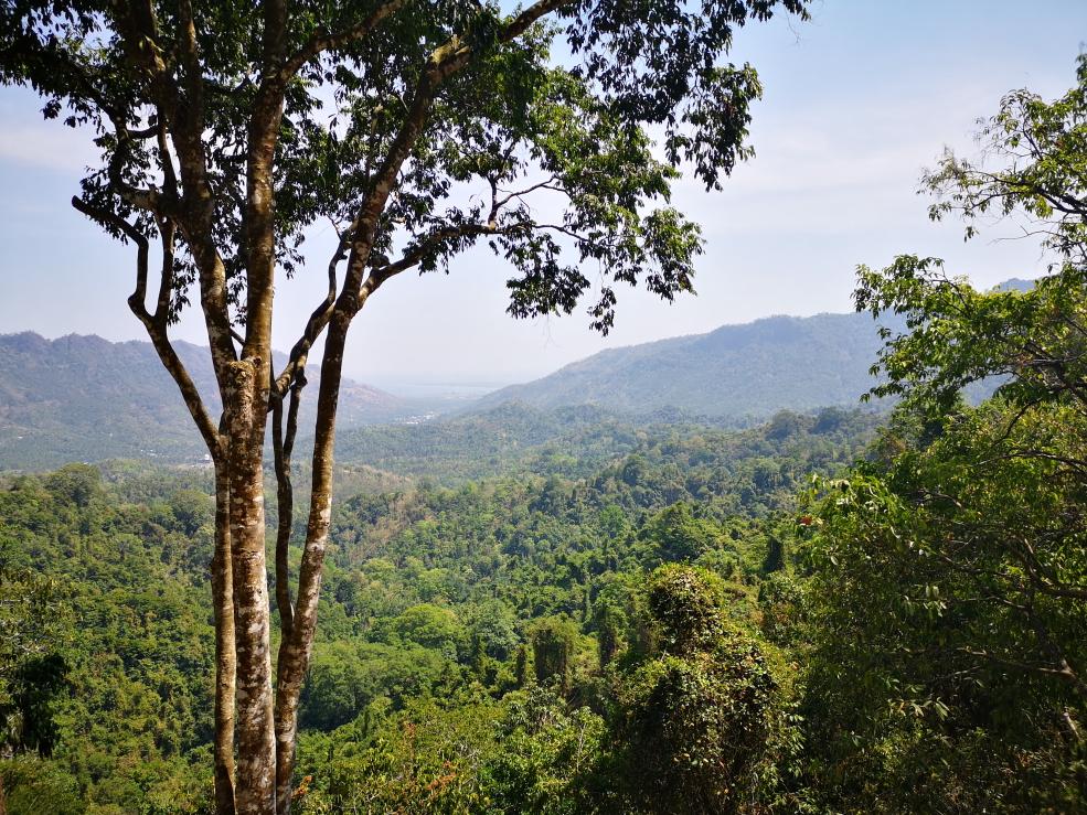 Vue sur la forêt tropicale de Lombok