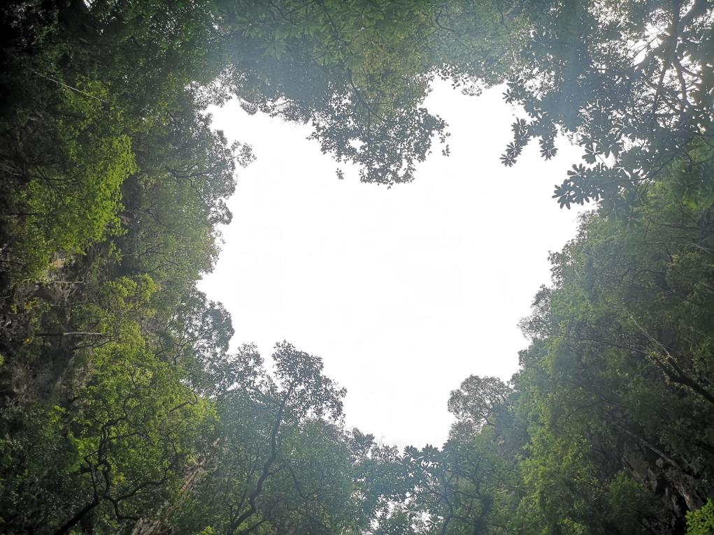 Les arbres en forme de cœur