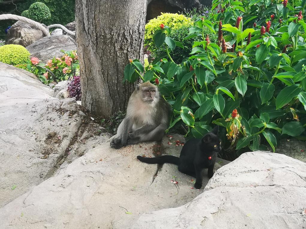 Encore un ptit chat et son copain macaque
