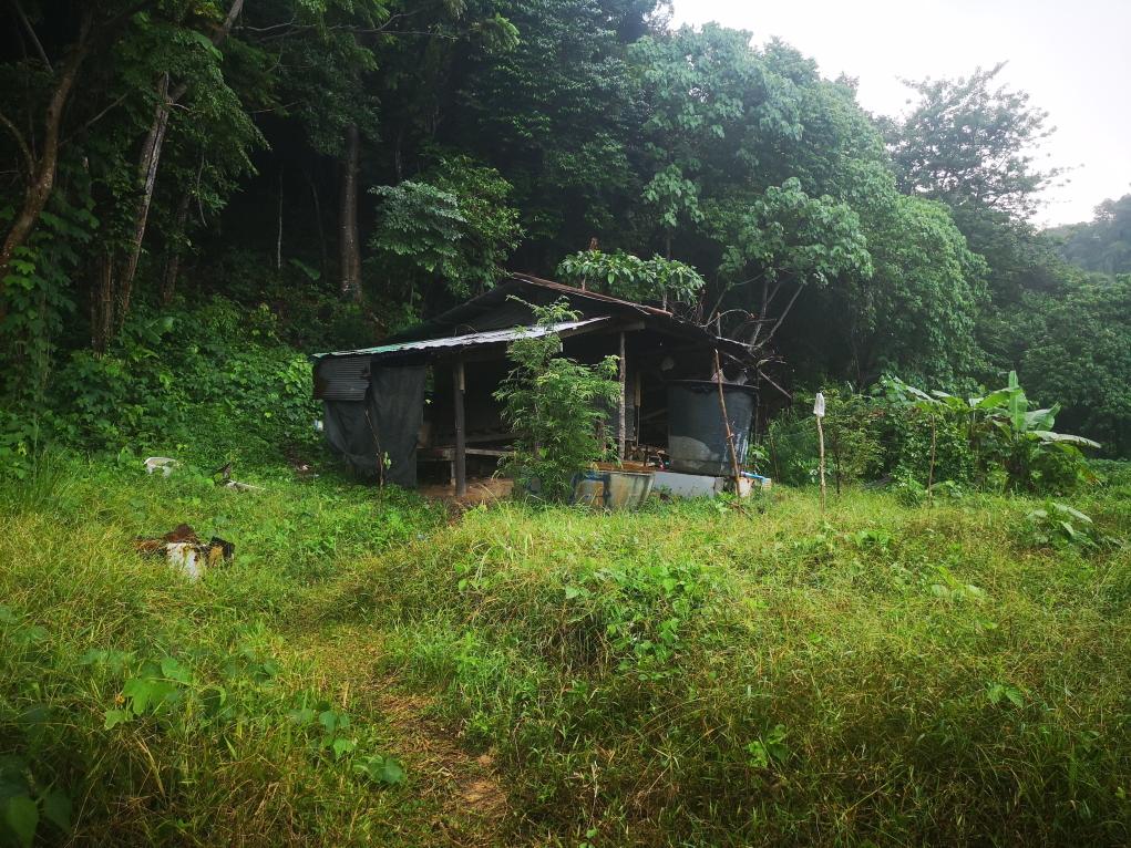 Une première habitation de fortune vers le village de Koh Phi Phi