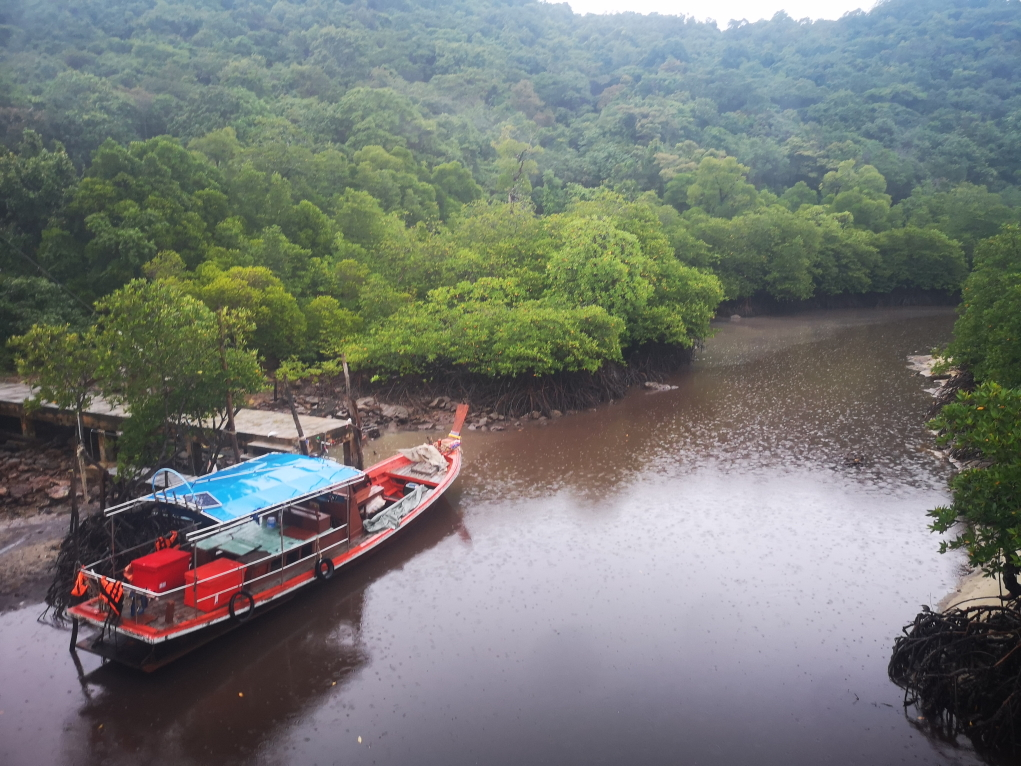 Mangrove à marée basse vers le Phi Phi Village
