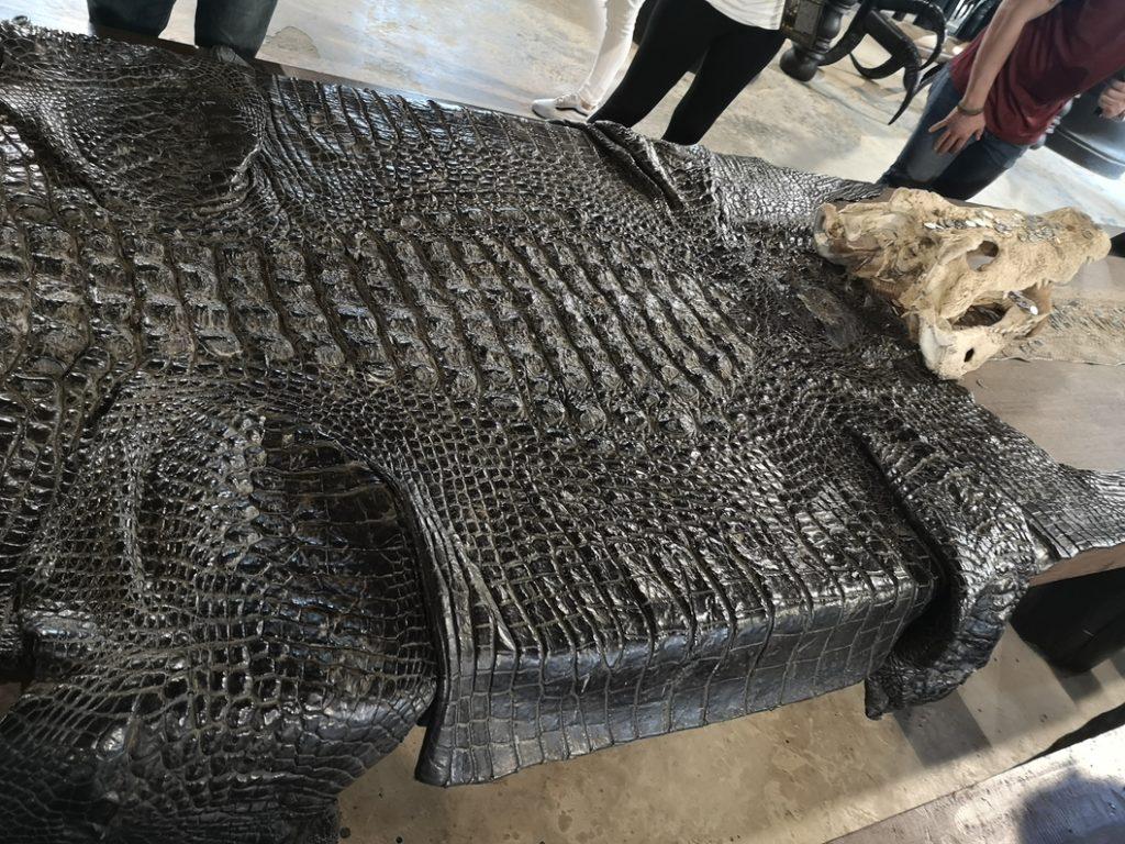 Peu de crocodile