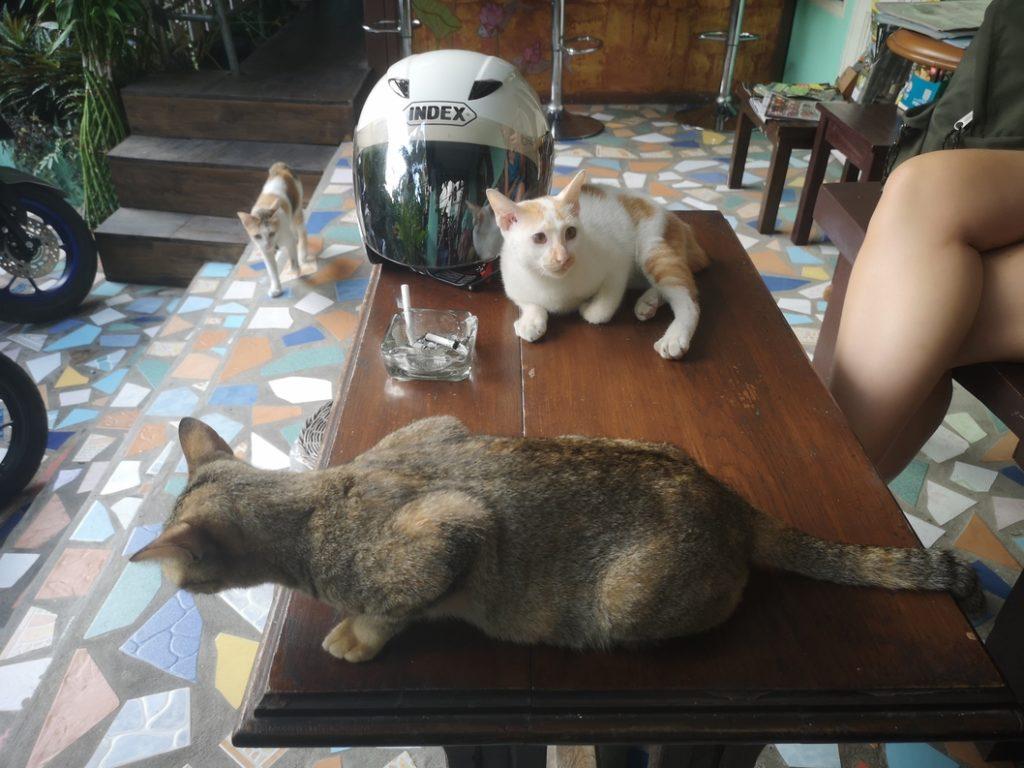 Comment un moment d'attente au pied de l'hôtel se transforme en réunion carressage de chats