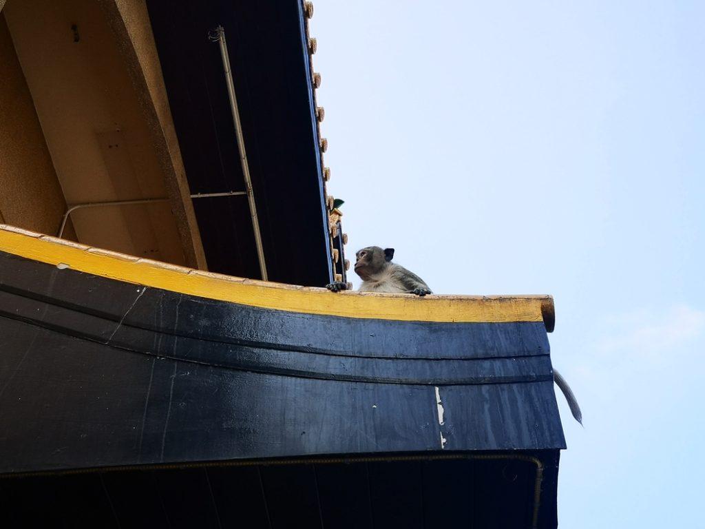 Un petit macaque qui observe les gens passer au coin de la rue
