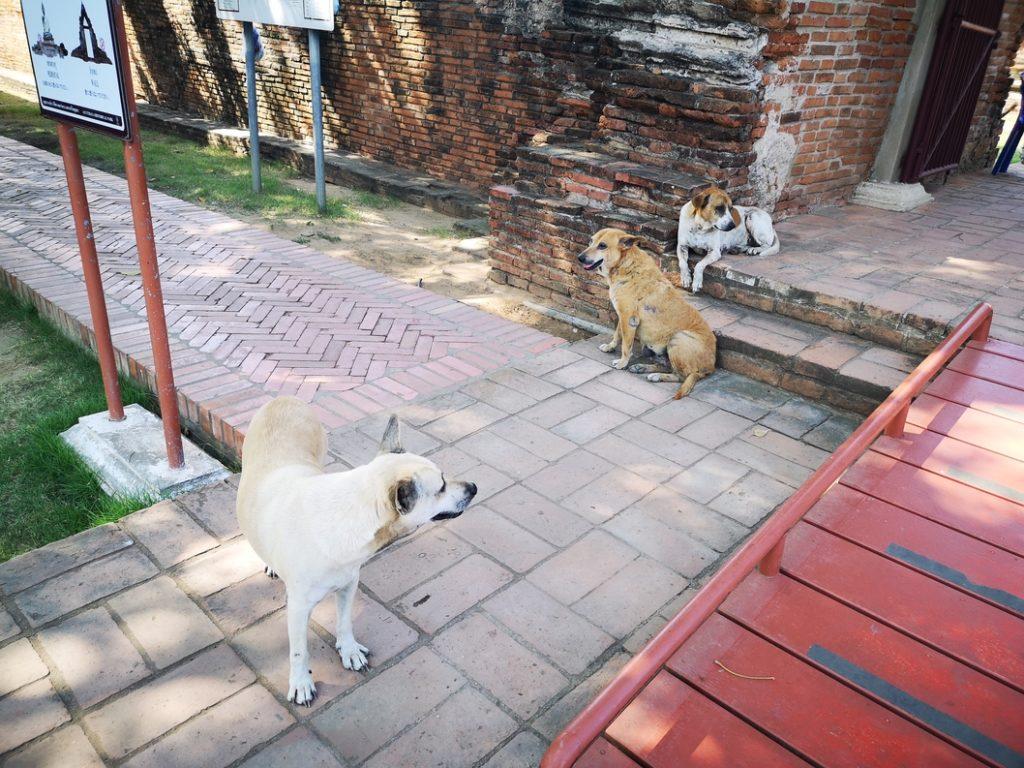 Des chiens tranquillement installés à l'ombre