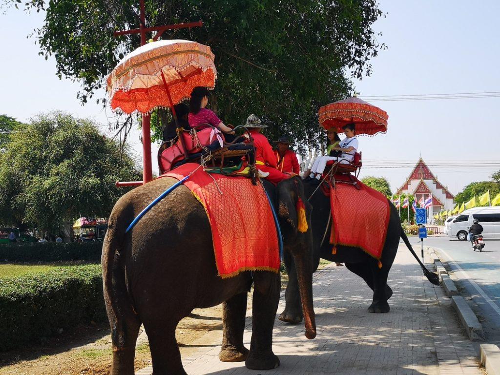 Des éléphants utilisés pour le tourisme: il ne faut jamais accepter de monter sur leur dos