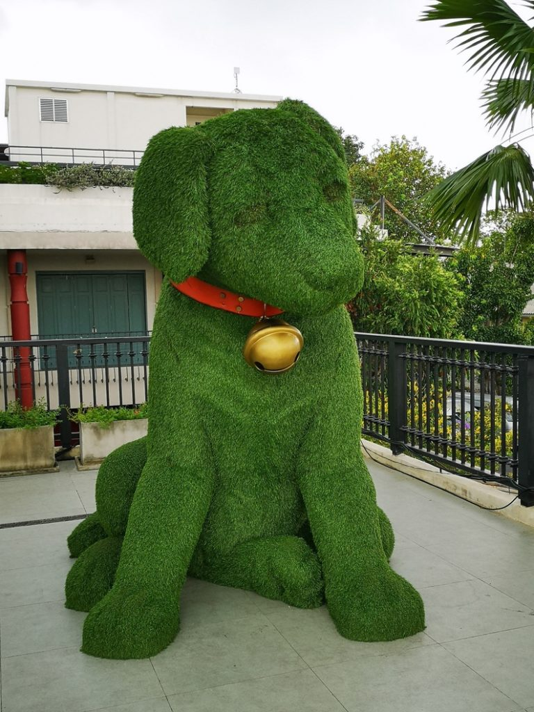 Un joli petit chien au Tha Maharaj