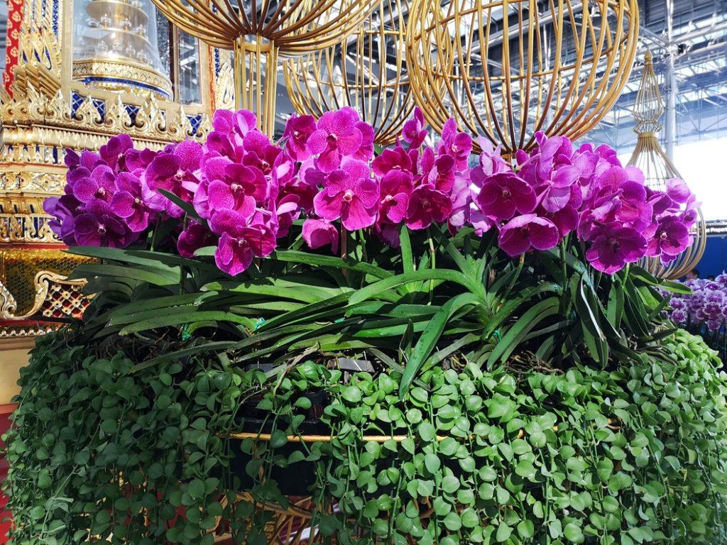 Des orchidées à l'aéroport de Bangkok