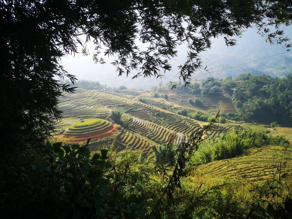 Vue magnifique sur les rizières en terrasses