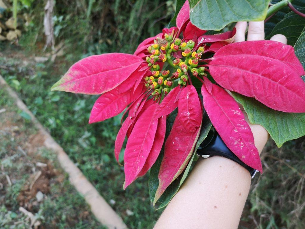 Une fleur locale
