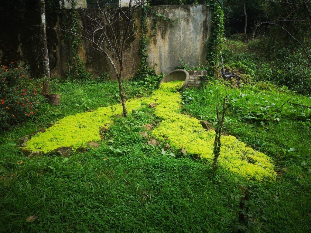 Un massif de plantes dans le jardin botanique